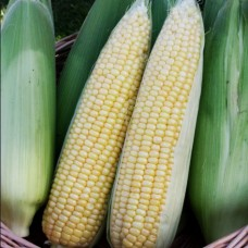 Кукуруза Лакомка Белогорья сах-я в кг ПП