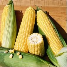 Кукуруза Бостон 1кг S&G