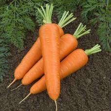 Морковь Зафиро (Олимпо) F1 (500шт) 1гр з/п   сред.ран. VL