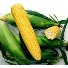 Кукуруза Ноа F1 (100000шт) Pop Vriend Seeds