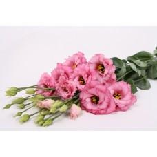 Лизиантус (эустома) крупноцветковый Колелли 3 Роуз 5шт Элитные семена