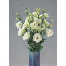Лизиантус (эустома) крупноцветковый Колелли 3 Вайт 5шт Элитные семена