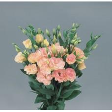 Лизиантус (эустома) крупноцветковый Колелли 3 Априкот 5шт Элитные семена