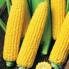 Кукуруза Детский вкус 5г б/п СД