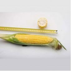 Кукуруза Добрыня F1 (2500шт) Lark Seeds