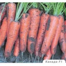 Морковь Канада F1 (500шт) позд з/п ВЕ