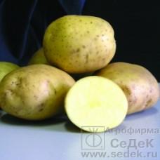 Картофель Илона (ср-спел, св-желтый) 0,02г СД