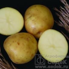 Картофель Лада 0,02г СеДек