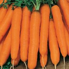 Морковь Амстердамская 2г б/п ПП