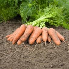Морковь Карини 10г з/п ран. BE
