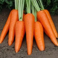 Морковь Абако F1 фр.1,6-1,8мм ран. 1млн.сем S