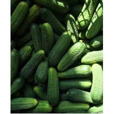 Огурец Трилоджи F1 RZ 5 шт Элитные семена