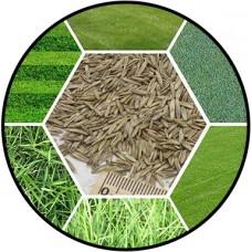 Травы, газоны, сидераты
