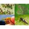 От вредителей (инсектицид)