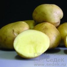Картофель Ассоль 0,02г СД