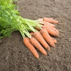 Морковь Карини (500г) ран. ВЕ