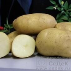 Картофель Императрица 0,02г СеДек