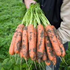 Морковь Балтимор F1 (100000шт) фр 1,6-1,8мм сред. ВЕ